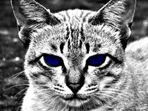 Monokromt blått öga för katt arkivfoto