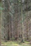 Monokultur im Holz lizenzfreie stockbilder