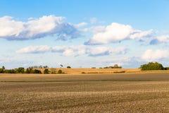 Monokultur-Mais-Felder von Indiana Lizenzfreie Stockfotografie