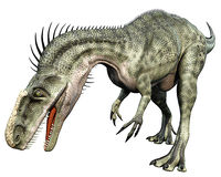 Monolophosaurus front side eating. Monolophosaurus (meaning single-crested lizard) was a genus of theropod dinosaur from the Middle Jurassic (about 170 Ma) of Royalty Free Stock Images