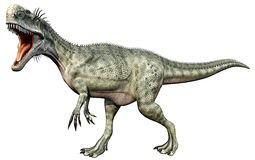 Monolophosaurus full body. Monolophosaurus (meaning single-crested lizard) was a genus of theropod dinosaur from the Middle Jurassic (about 170 Ma) of the stock illustration