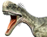 Monolophosaurus side close head. Monolophosaurus (meaning single-crested lizard) was a genus of theropod dinosaur from the Middle Jurassic (about 170 Ma) of Royalty Free Stock Photo