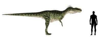 Monolophosaurus Size Comparison stock illustration