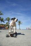 Monopatín brasileño Rio de Janeiro Brazil del montar a caballo del perro fotografía de archivo