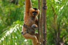 Monos Imagen de archivo