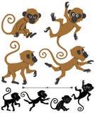Monos Fotografía de archivo libre de regalías