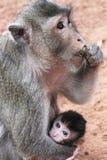 Monos Foto de archivo