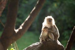 monos Fotografía de archivo
