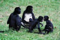 Monos Fotos de archivo