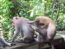 Monos Imágenes de archivo libres de regalías
