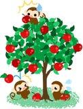 Monos bonitos de los monos que recolectan manzanas Fotografía de archivo libre de regalías