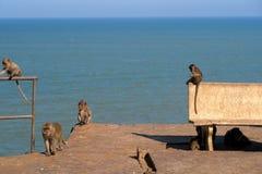 Monos cerca del mar Imágenes de archivo libres de regalías