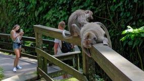 Monos de Bali imagenes de archivo