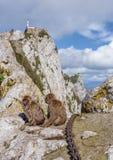 Monos de Gibraltar Fotografía de archivo libre de regalías