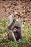Monos de la madre y del bebé; Fotos de archivo libres de regalías