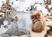 Monos de la nieve Fotos de archivo libres de regalías