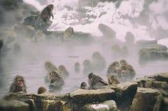 Monos de la nieve Fotos de archivo