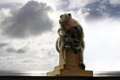 Monos de los templos Fotografía de archivo libre de regalías