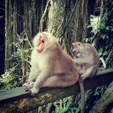 Monos en Bali imagenes de archivo
