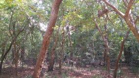 Monos en bosque Fotos de archivo