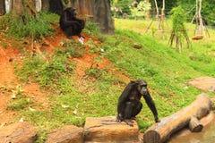Monos en el árbol en naturaleza en el parque zoológico Fotografía de archivo libre de regalías