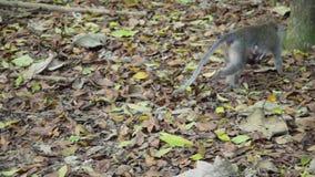 Monos en el bosque en Bali almacen de video