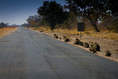 Monos en el camino Foto de archivo libre de regalías