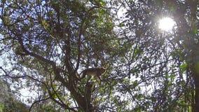 Monos en el parque almacen de metraje de vídeo