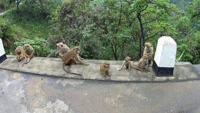 Monos en el parque almacen de video