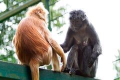 Monos en el parque zoológico Imágenes de archivo libres de regalías