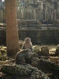 Monos en el templo fotos de archivo