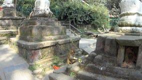 Monos en el templo del mono