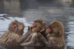 Monos en encadenamientos. Fotografía de archivo