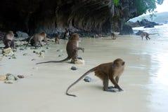 Monos en la playa Imágenes de archivo libres de regalías