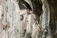 Monos en la roca imagen de archivo libre de regalías