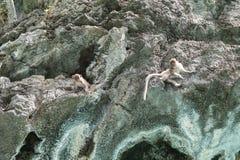 Monos en la roca fotos de archivo libres de regalías