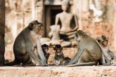 Monos en Lopburi, Tailandia imagen de archivo