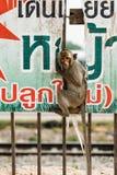 Monos en Lopburi, Tailandia fotos de archivo