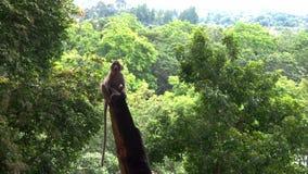Monos en nture Fotos de archivo