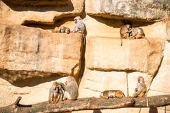 Monos en PARQUE ZOOLÓGICO Imagenes de archivo
