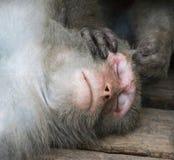 Monos en Shoushan, montaña del mono en la ciudad de Gaoxiong Imágenes de archivo libres de regalías