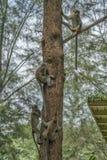 Monos en un árbol cerca de un lugar del resto fotografía de archivo libre de regalías