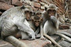 Monos familly foto de archivo libre de regalías