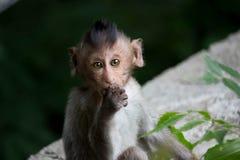 Monos lindos fotos de archivo libres de regalías