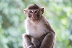 Monos lindos Imágenes de archivo libres de regalías
