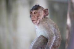 Monos lindos Imagenes de archivo