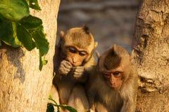 Monos lindos imagen de archivo