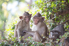 Monos lindos foto de archivo