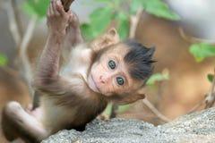 Monos lindos foto de archivo libre de regalías