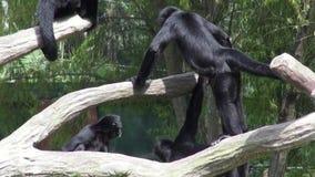 Monos, primates, animales del parque zoológico, fauna, naturaleza metrajes